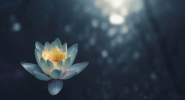 Floare_Lotus_Teratai_blog
