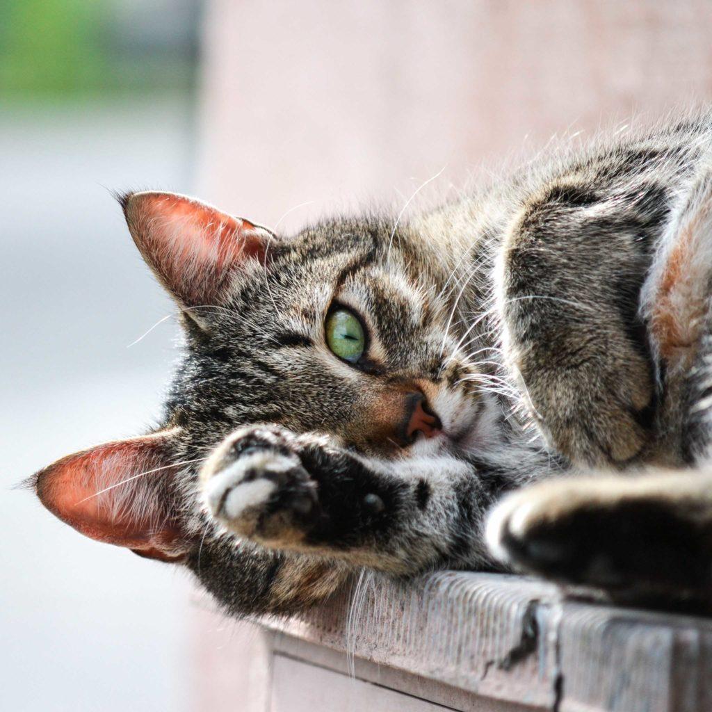 pisica alintata. iubire de sine