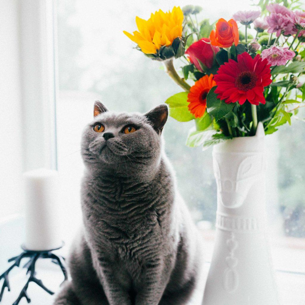 pisica cu flori. iubire de sine