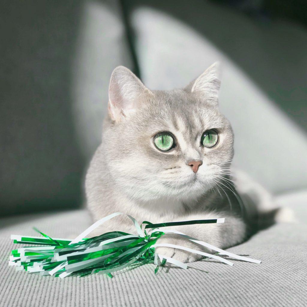 pisica si jucarie