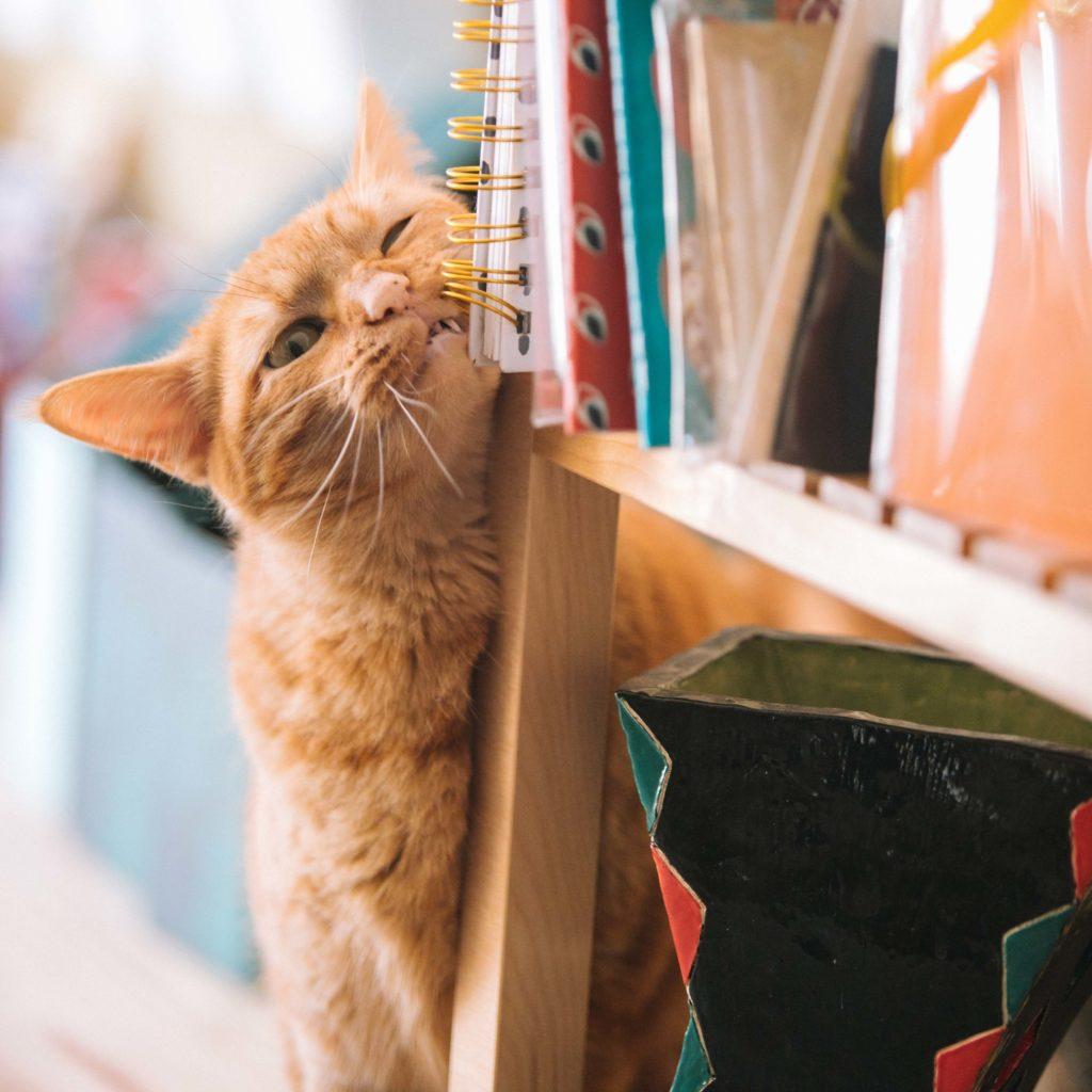 pisica alintata
