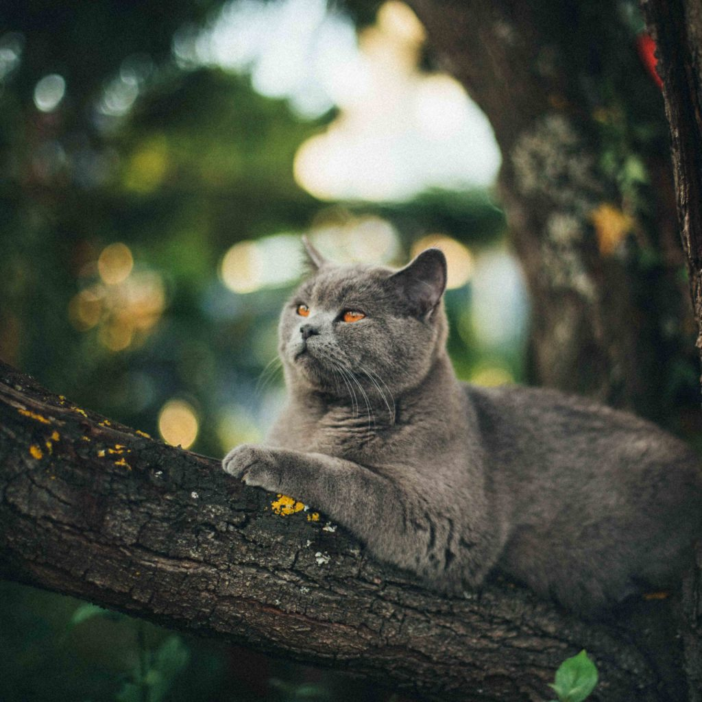 pisica in copac