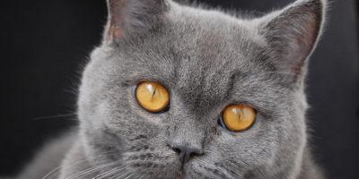 lectii invatate de la pisici